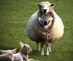 Here's how to spot a wolf in sheep's clothing